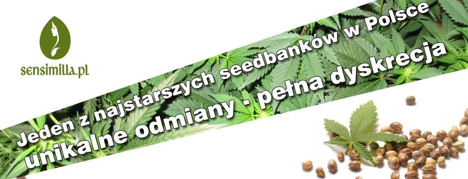 nasiona seedbank sklep odmiany