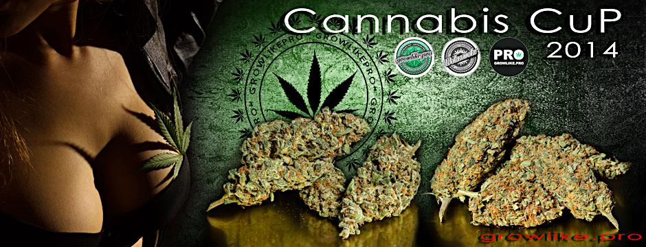 konkurs glp cannabis cup