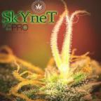 SkyneT 2.0 Avatar